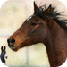 Horse Horse Donkey - Memory game for people who love horses